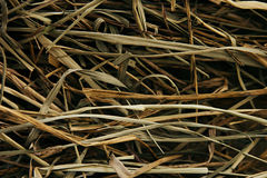 Suchy siano Trzony verdure pozyskiwania środowisk gentile Fotografia Stock