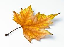 Suchy spadać liść zdjęcie royalty free