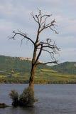 Suchy stary drzewny w jeziorze samotnie Obrazy Stock