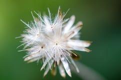 Suchy szklany kwiat Obrazy Stock