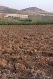 suchy uprawy pole zdjęcia royalty free