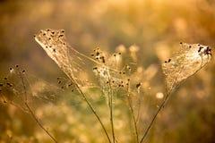 Suchy ziele w sieci Fotografia Stock