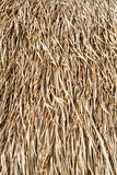 Suchych traw dach Zdjęcie Stock