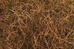 suchych traw tło Fotografia Stock