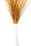 suchych traw wazowy biel Zdjęcia Stock