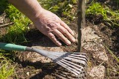 Suciedad de cepillado de la mano de piedras del jardín en Sunny Day Fotografía de archivo libre de regalías