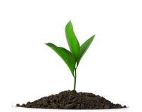 Suciedad del montón con una planta verde imagen de archivo libre de regalías