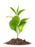 Suciedad del montón con una planta verde fotografía de archivo libre de regalías