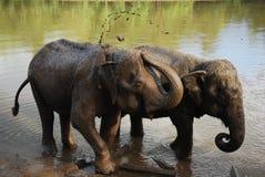 Suciedad mojada del elefante Imágenes de archivo libres de regalías