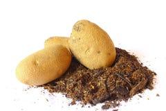 Suciedad y patatas Foto de archivo libre de regalías