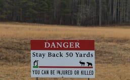 Sucka fara, stag tillbaka 50 gårdar, kan du såras eller dödas Royaltyfri Bild