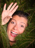 Sucked in by pine! Royalty Free Stock Photo