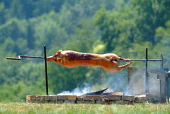 Suckling pig. A hot suckling pig on spit outside stock photos