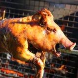 Suckling Pig Royalty Free Stock Image
