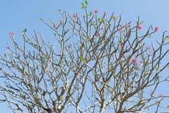 Suckulent filial- och rosa färgblomma Arkivbilder