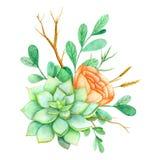 Suckulent med blommor på en vit bakgrund Dragen illustration för vattenfärg hand Göra perfekt för kort och att gifta sig inbjudan Royaltyfri Illustrationer