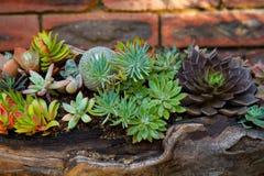 Suckulent plantera Royaltyfri Foto