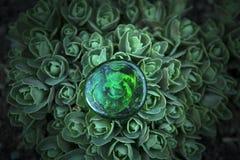 suckulent stenträdgård för grönt exponeringsglas inget royaltyfria bilder