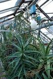 Suckulent växthus Royaltyfri Fotografi