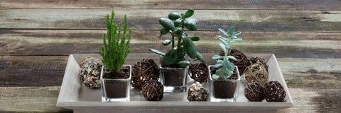 Suckulenta houseplants på tappningtabellen för inomhus flora arbeta i trädgården Arkivfoto