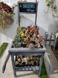 Suckulenta växter i en lantlig vagn mycket av till salu små växter arkivbild