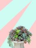 Suckulenten planterar ordning i konkret planter på moderiktig deg Arkivfoton