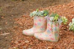 Suckulentväxter och rainshoes Arkivfoton