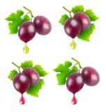Suco de uva e óleo de sementes isolados fotografia de stock royalty free
