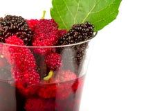 Suco do Mulberry. Imagem de Stock