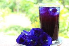 Suco fresco da ervilha de borboleta Fotos de Stock Royalty Free