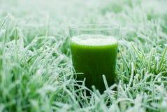 Suco verde saudável da desintoxicação Imagem de Stock
