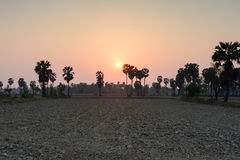 Sucrez le palmier dans la scène rurale le temps de coucher du soleil, Thaïlande Images libres de droits