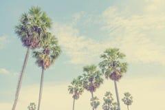 Sucrez les palmiers dans le domaine sur le ciel bleu, Thaïlande Photo libre de droits