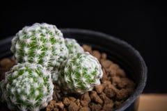 Suculento hermoso y cactus imágenes de archivo libres de regalías