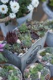 Sucullents dans des pots Décor à la maison croissant Décoration botanique verte photos stock