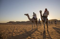 Sudanese men with their camels Royalty Free Stock Photography