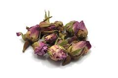 Sudanese rose. Bud on white background Royalty Free Stock Photography
