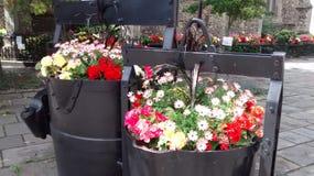 Sudbury mit Blumen Stockfoto
