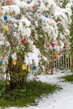 Sudden cold snap at easter with fresh fallen snow on bush with e Stock Image