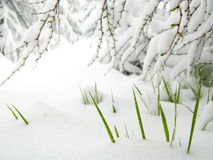 Sudden spring snowfall Stock Image