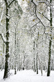 Suddenly fallen snow in the autumn birch forest. Suddenly fallen fluffy snow in the autumn birch forest Stock Image