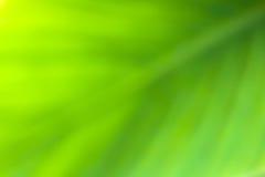 Suddig abstrakt bakgrund för grönt blad Arkivbild