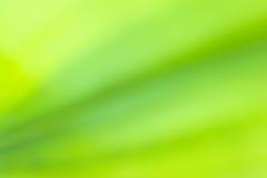 Suddig abstrakt bakgrund för grönt blad Arkivfoto