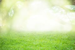 Suddig bakgrund eller bakgrund grön natur Abstrakt stil Royaltyfri Fotografi