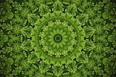 Suddig bakgrund för abstrakt grönska, wi för mossajordräkningsväxt Arkivfoto