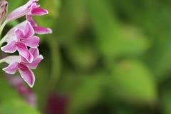 Suddig bakgrund för blommor och för gräsplansidor Royaltyfri Bild