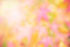 Suddig bakgrund för japansk lönn Royaltyfri Fotografi