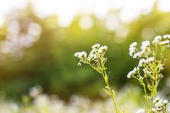Suddig bakgrund för växt Arkivfoton