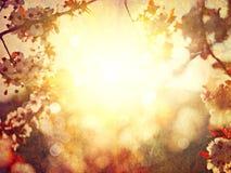 Suddig bakgrund för vårblomning Fotografering för Bildbyråer