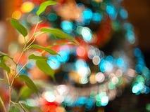 Suddig bakgrund som göras med julgranen och den gröna växten Arkivbild